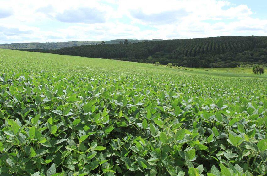 Plano Safra destina R$ 24,1 bilhões para Agricultura Familiar