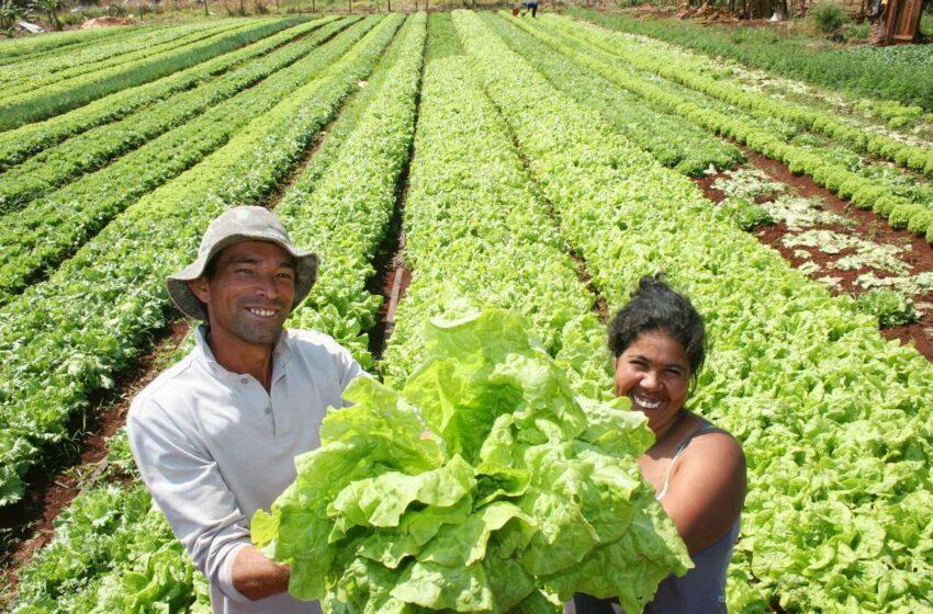 Agricultores familiares aplicam R$ 18,6 bi em 10 meses
