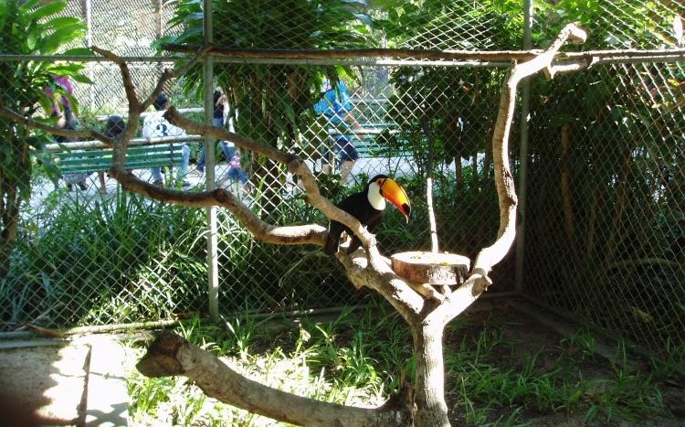 Sem adequação, zoológico de Passo Fundo corre risco de fechar no RS