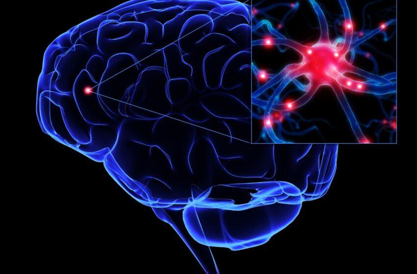 Estudo: 14% dos adultos com até 39 anos têm memória falha