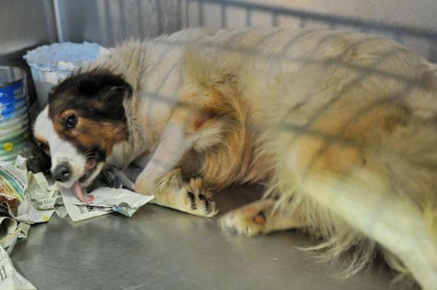 Veterinário é processado por maus-tratos a cães usados em pesquisa na UFSM