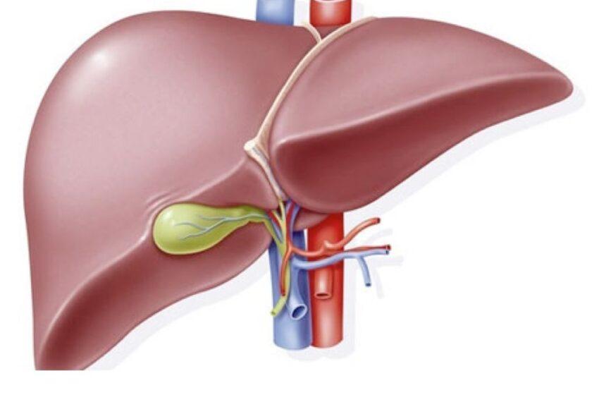 Mutação que causa câncer de fígado é descoberta por cientistas espanhóis