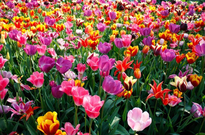 Inicia a estação primavera