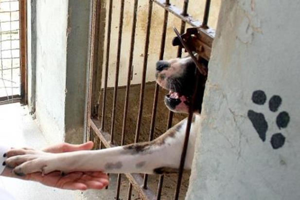 Projeto prevê desconto de IPTU para quem adotar animal em Porto Alegre