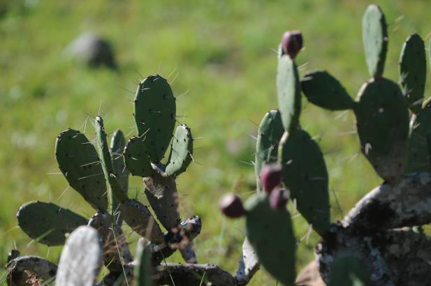 Mais de 800 espécies da flora gaúcha estão ameaçadas de extinção