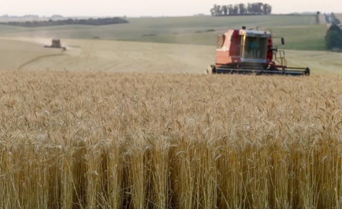 """Colheita de trigo do RS avança para final com qualidade """"péssima"""", diz Emater"""