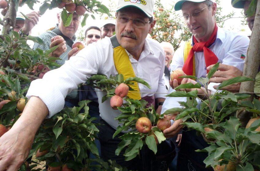 Governador abre safra da maçã 2016